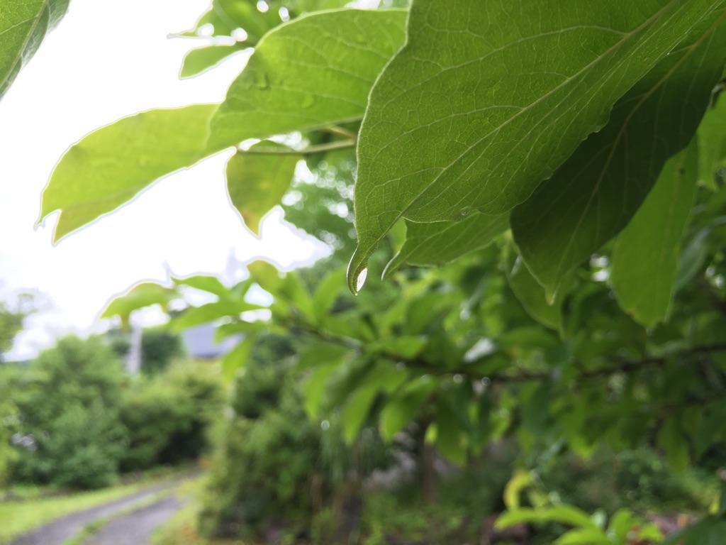 今日の軽井沢【雨後曇り】