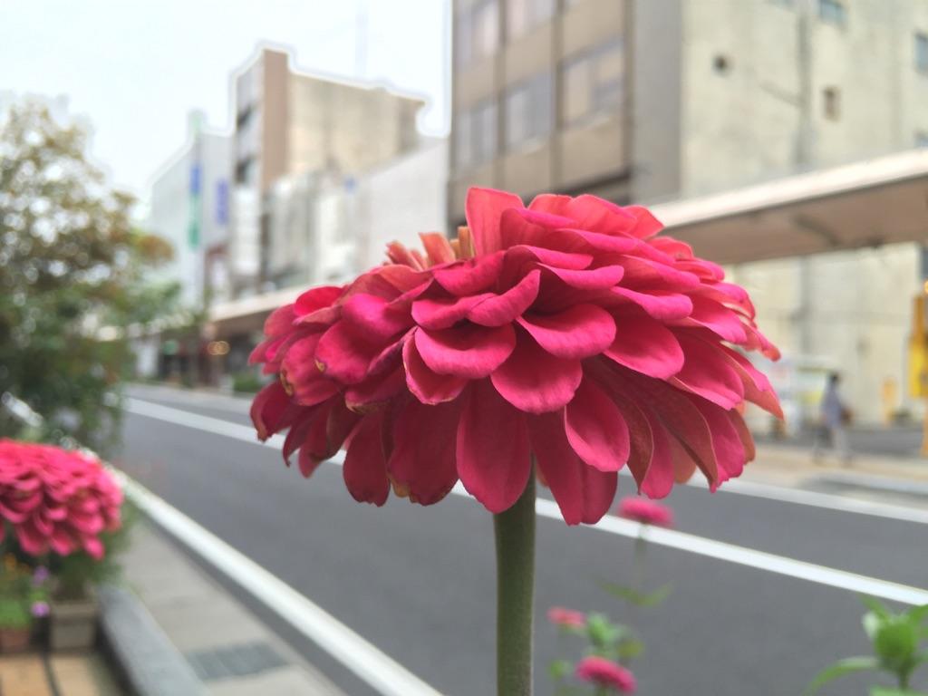 上田で見つけた秋のかほり。