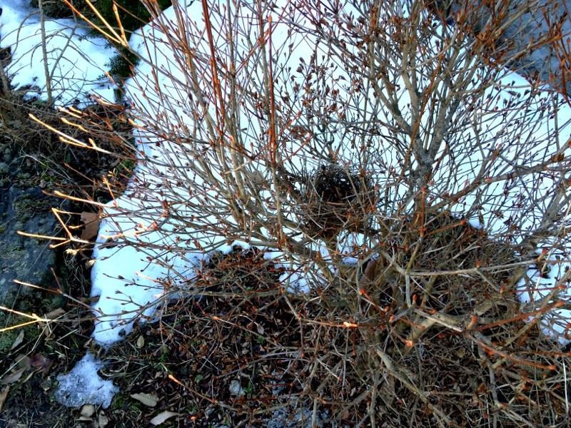 庭の雑木の枝落としと間伐をする。