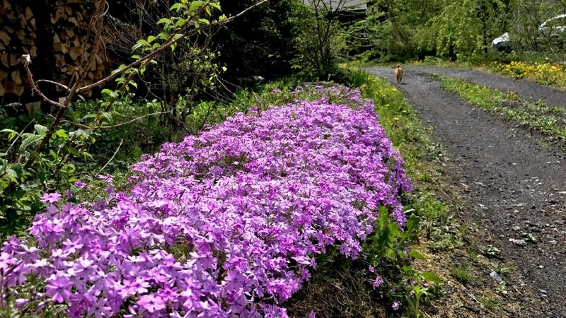 春爛漫から新緑を経て初夏へ。