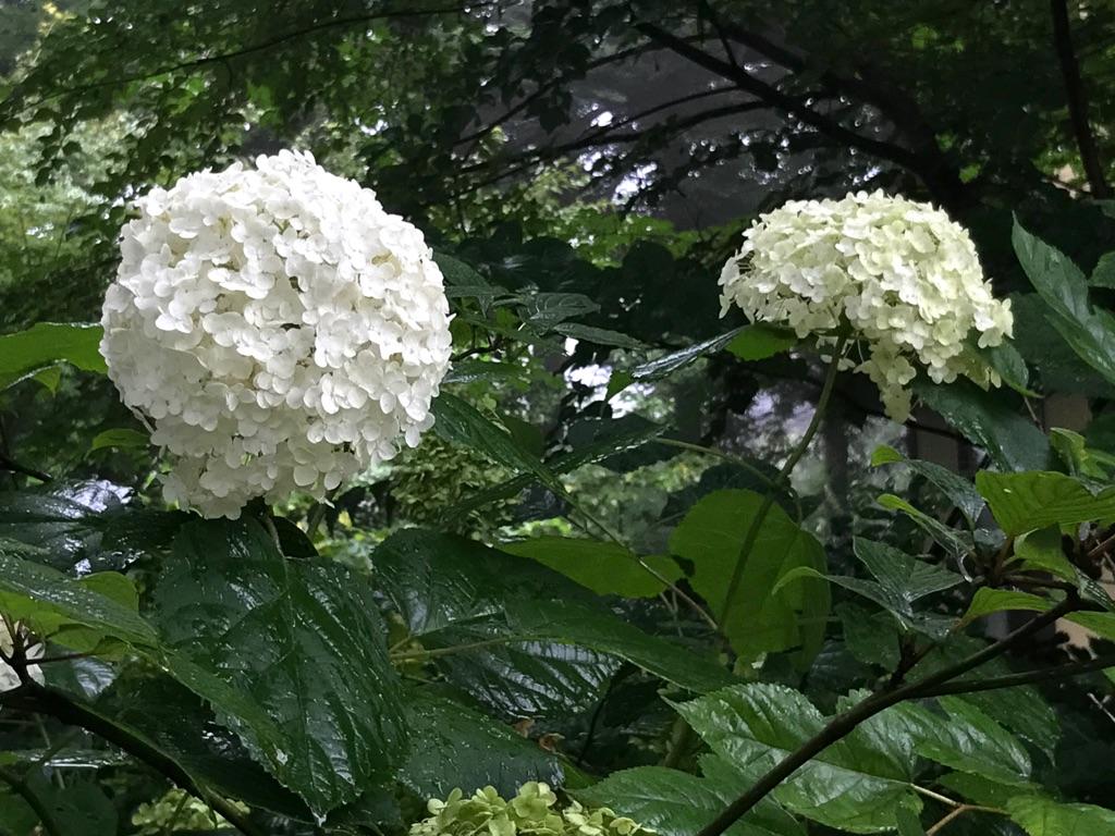 今朝の軽井沢【霧】