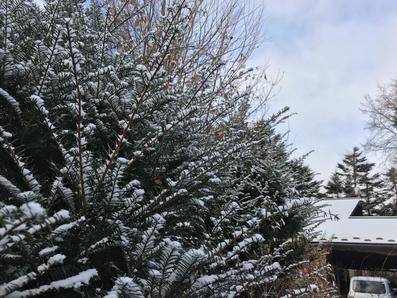 雪のち晴れの朝。