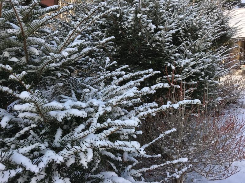 なごり雪。