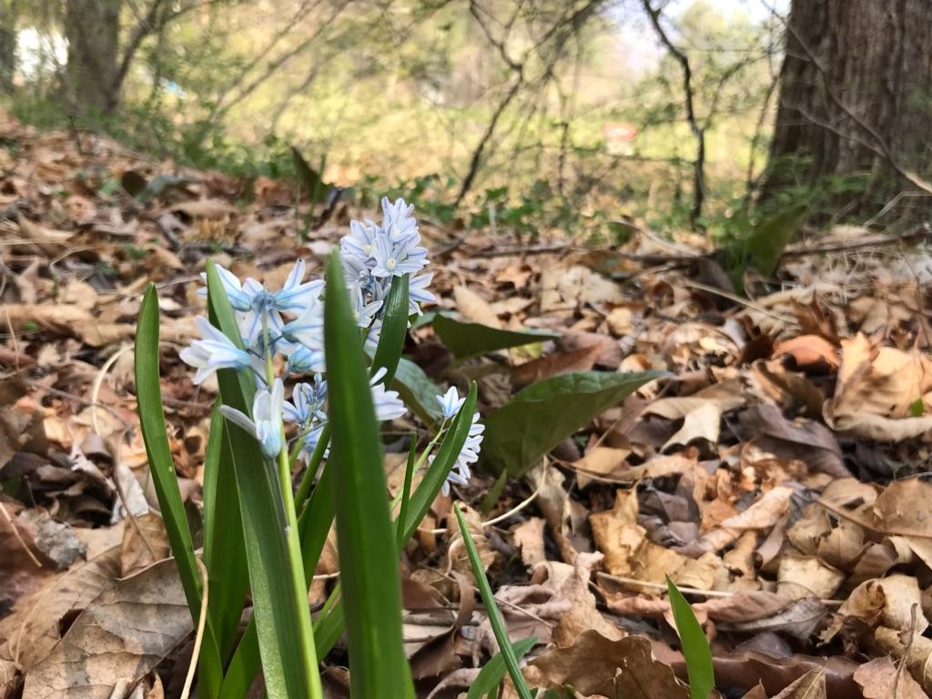 春爛漫から新緑へ