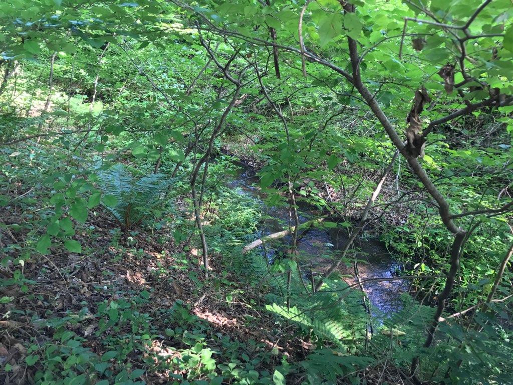 林と小川がくれる涼しさ。