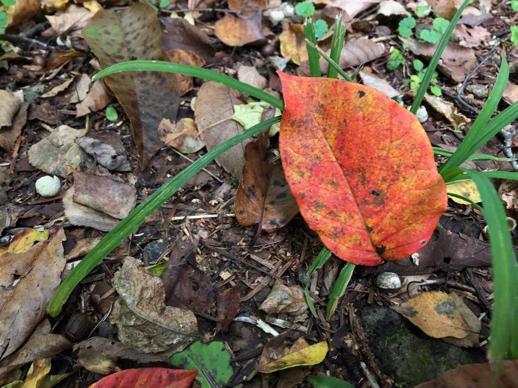 秋深まる。