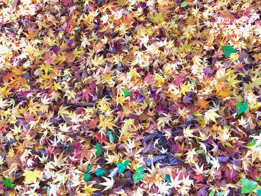 晩秋から初冬へ。