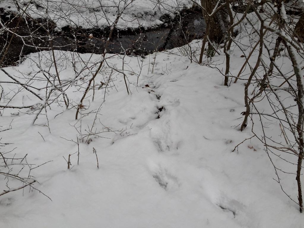 雪に残る印。