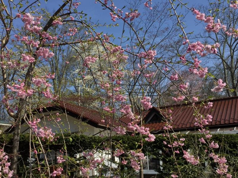 春花満開。
