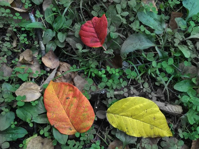 紅葉はじまる。