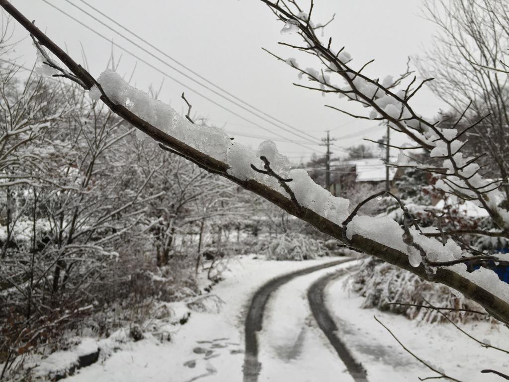 今朝の軽井沢【雪のち雨】