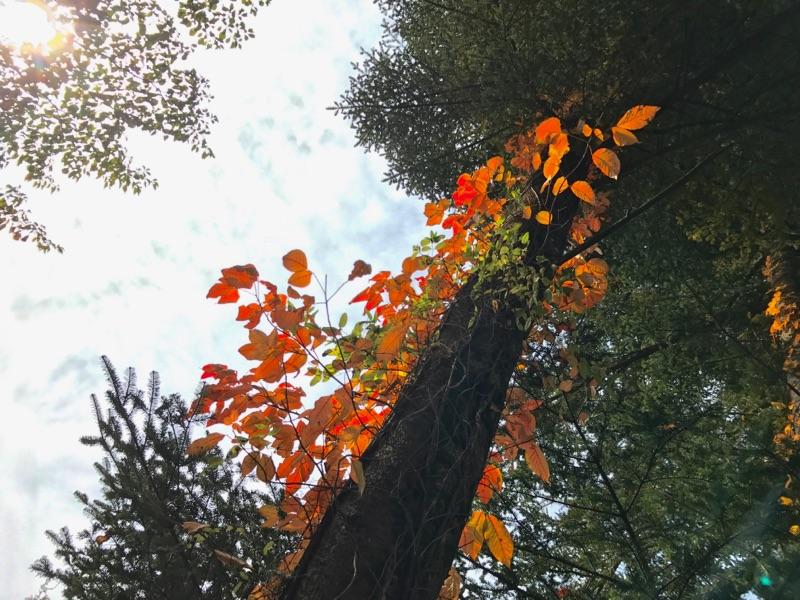 今日の軽井沢【曇り時々晴れ】
