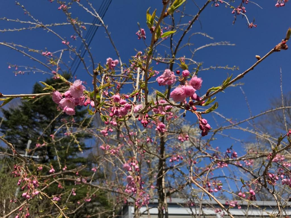 春きたる。