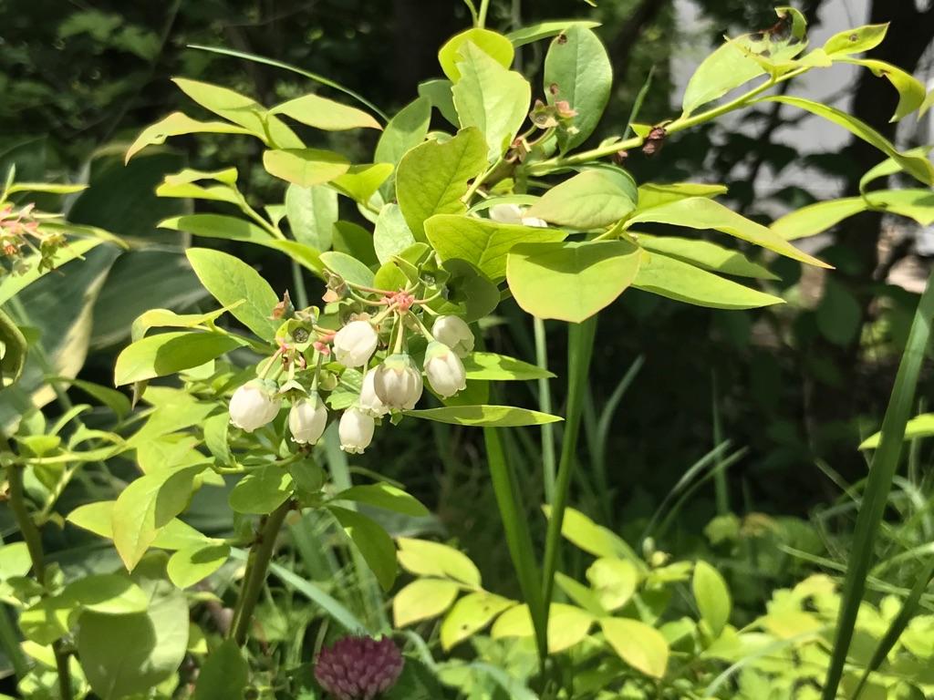 梅雨目前の庭