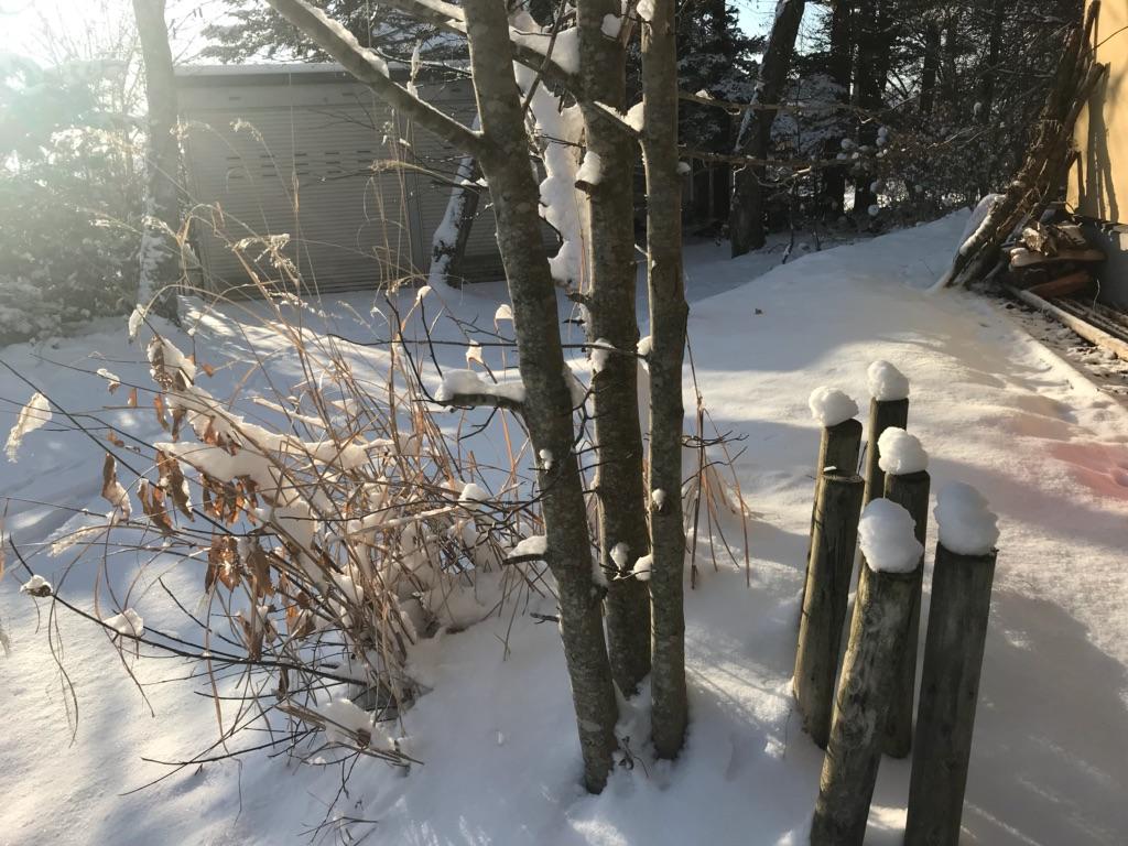久しぶりの雪。