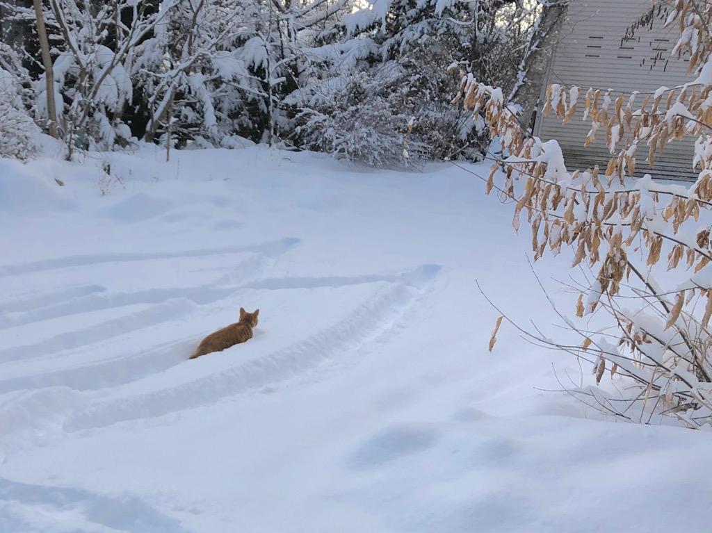 今朝の軽井沢【雪のち晴れ】